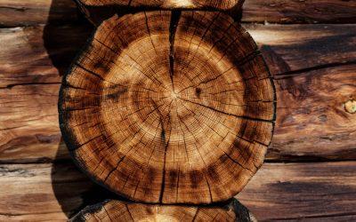 10 Vorurteile gegen Holz – und was der Fachmann dazu sagt